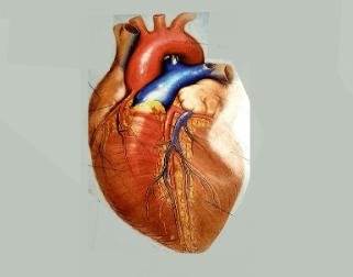 Širdies žymenys